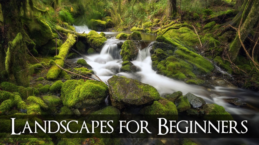 Landscapes for Beginners Nanaimo