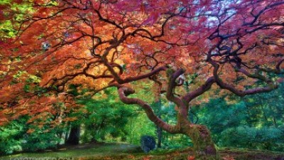 How to Shoot Portland Japanese Garden