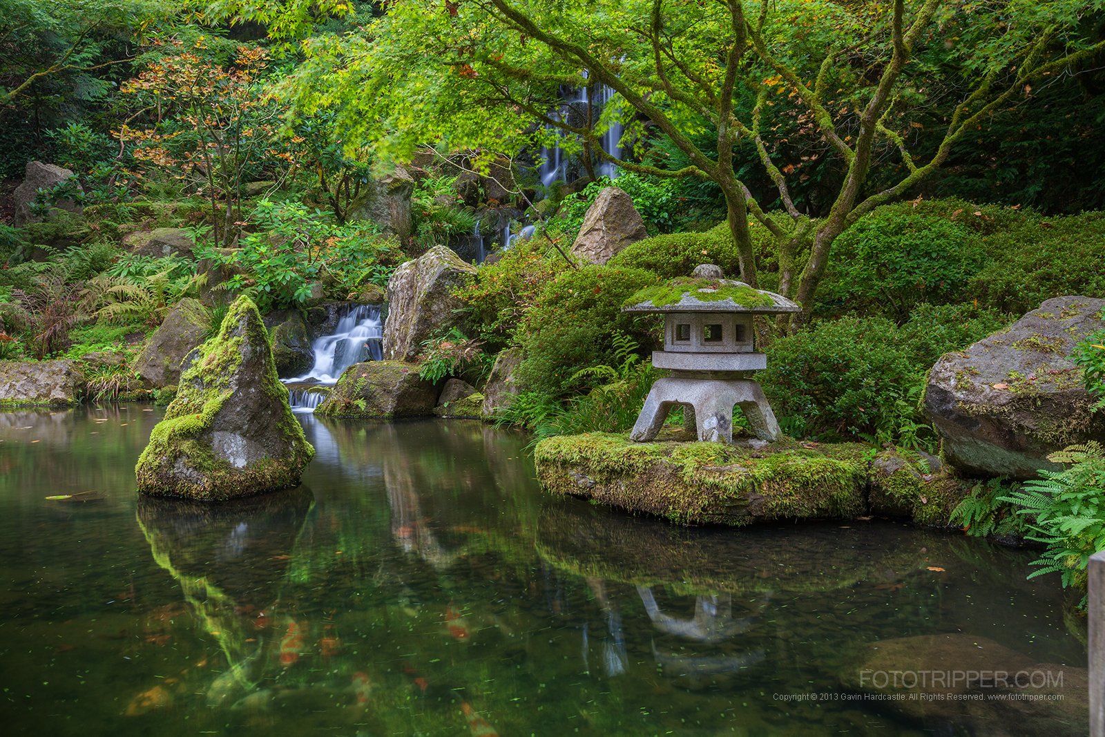 koi pond and waterfall at portland japanese garden
