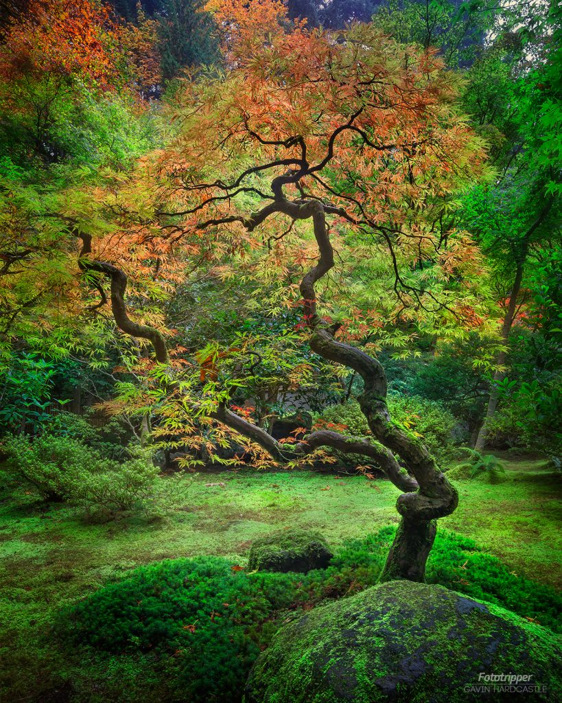 How To Shoot Portland Japanese Garden