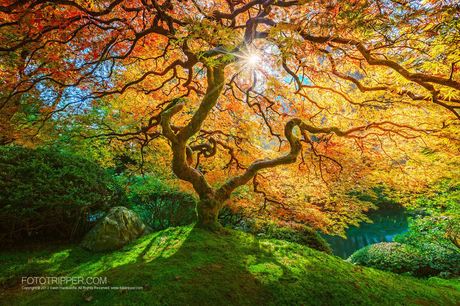 A Bright Future - Portland Japanese Gardens