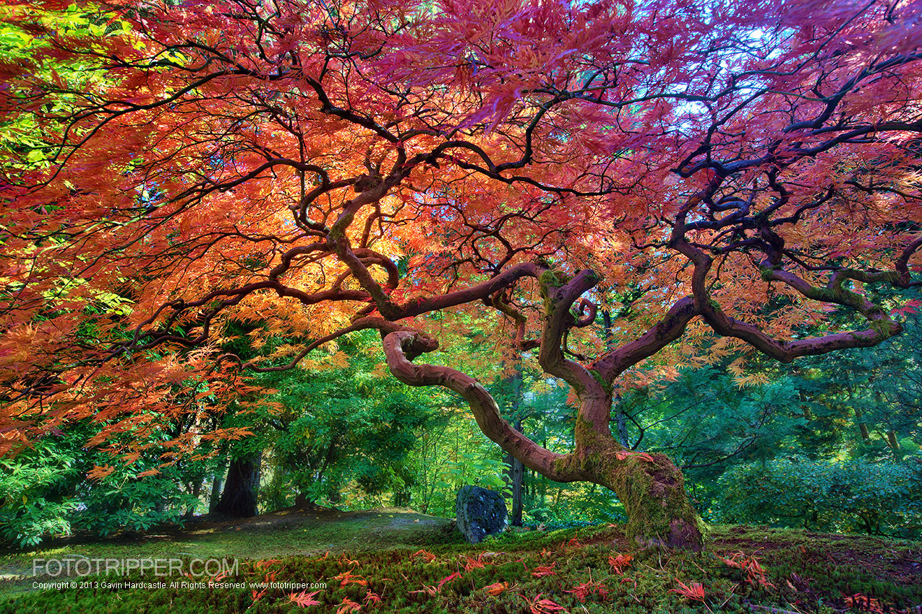How To Shoot Portland Japanese Garden Fototripper