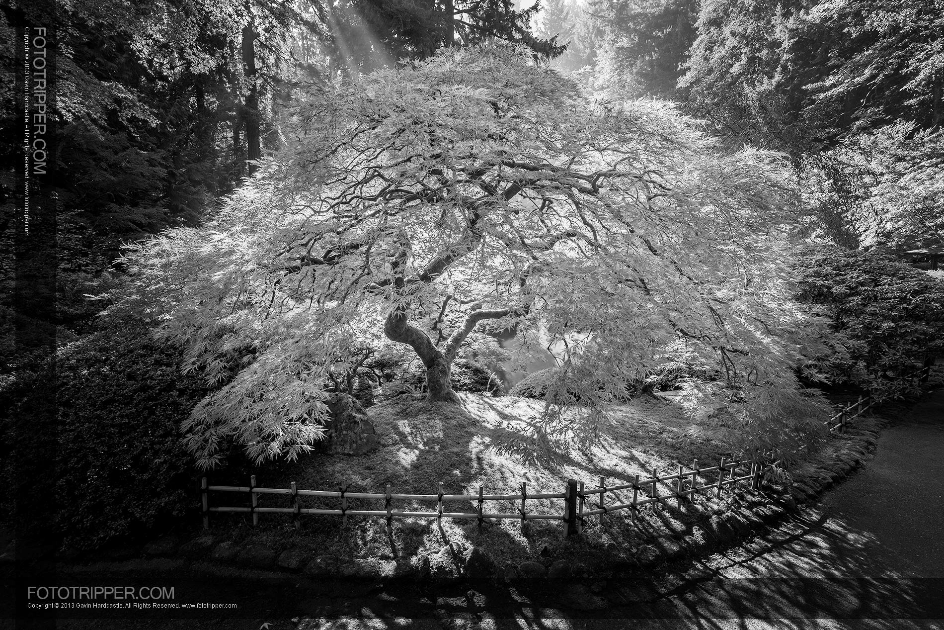 Black + White Photography - Portland Japanese Garden