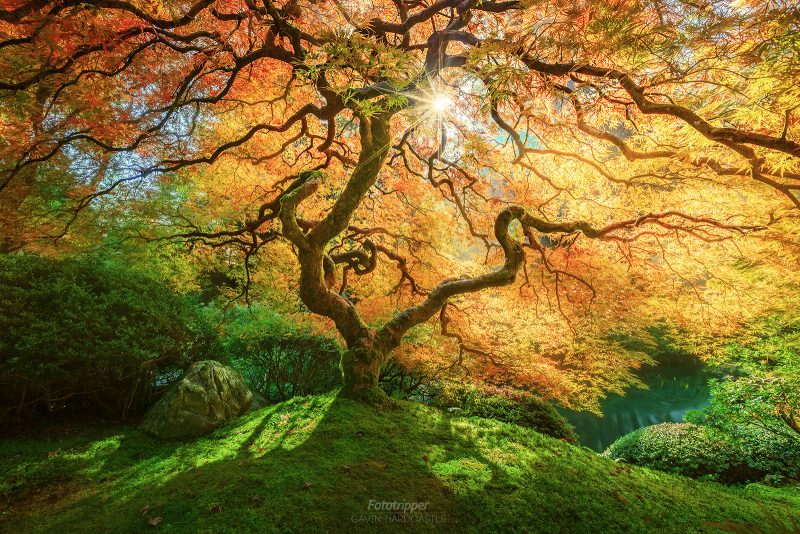 A Bright Future - Portland Japanese Garden