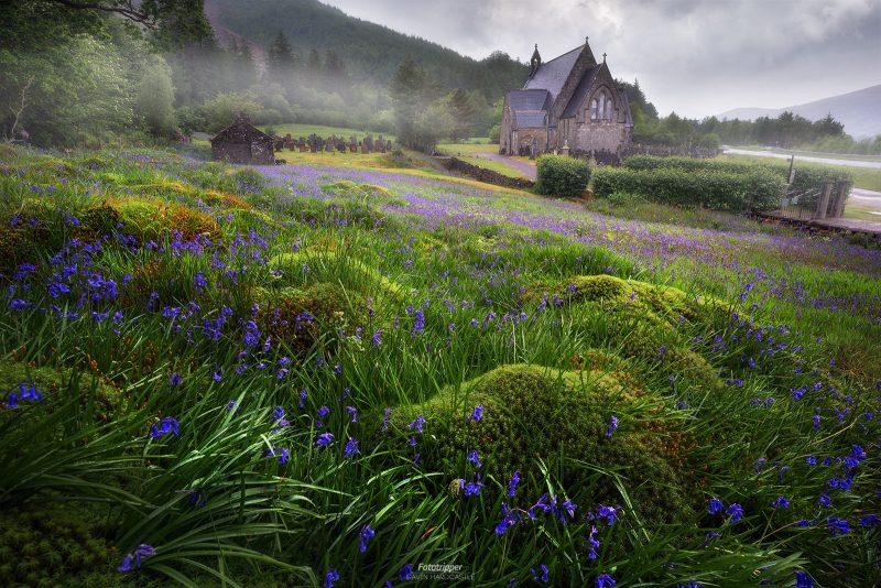 Carpet of Bluebells - Ballachulish, Scotland