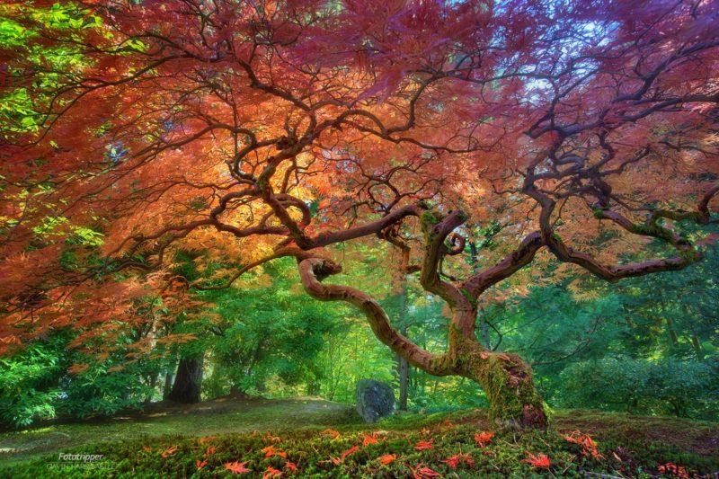 Portland Japanese Garden Photography Guide