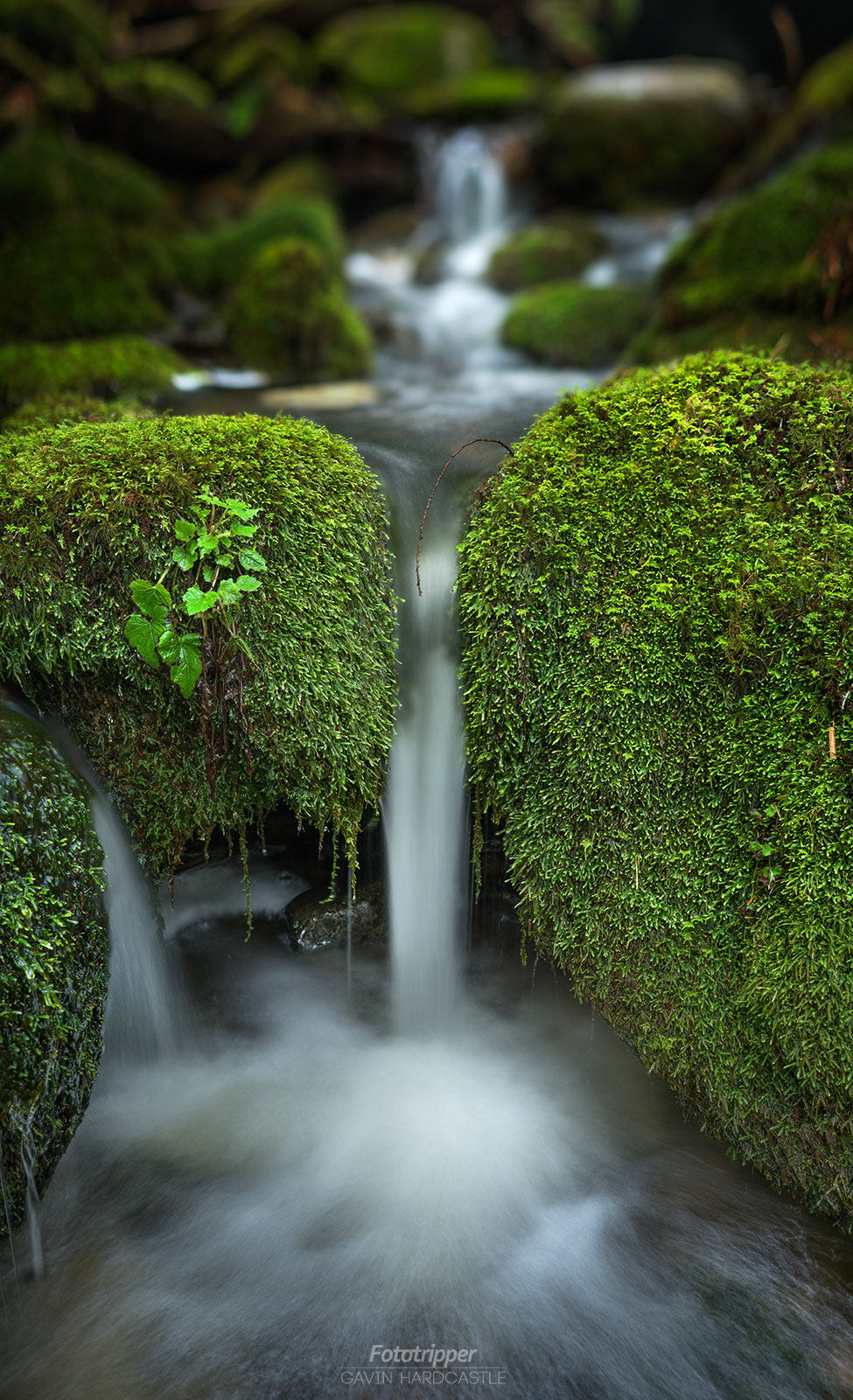 Vancouver Island Photography Workshops
